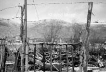 بساتين الصالحية في دمشق عام 1953