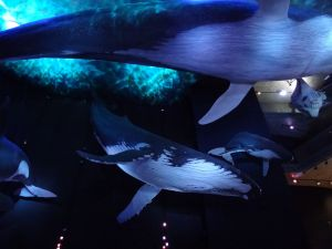 Im Ozeaneum bei den Walen
