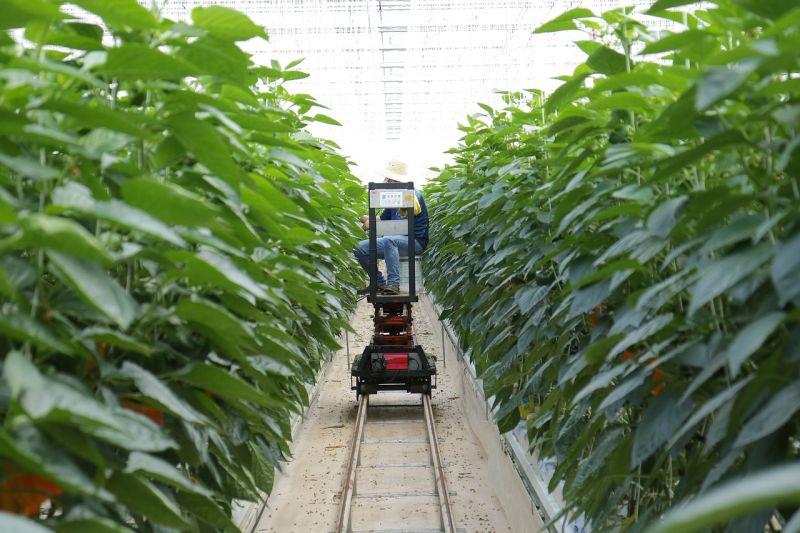 Smart farming: l'agricoltura del futuro per combattere il cambiamento climatico