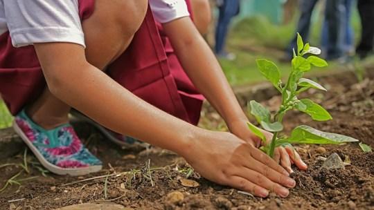 I migliori siti per piantare un albero online