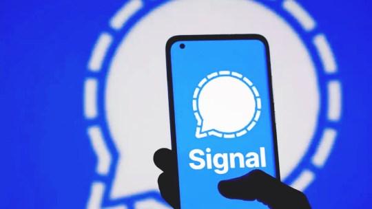 Si vede se sei online sulla chat di Signal?