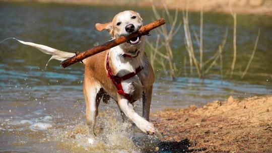 Al igual que el perro de Pavlov, este termoplástico está aprendiendo un nuevo truco: caminar