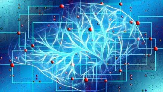 Big Brain: un proyecto que pone el cerebro humano al descubierto