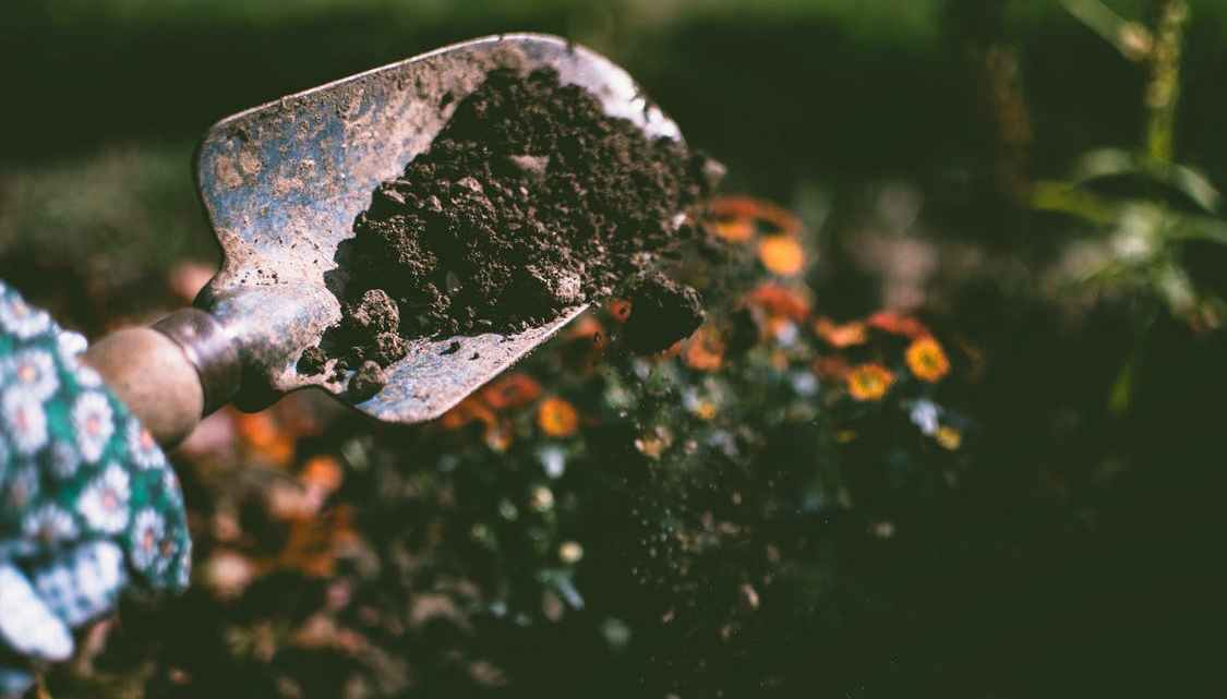 How to get the best natural fertilizers for the garden