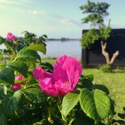 Deilige sommerdager - duften av blomster og solen som varmer