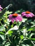 Disse flotte blomstene fra solhatten som står i hagen ga meg inspirasjon til å blande farger på stripene med batikkstoffene
