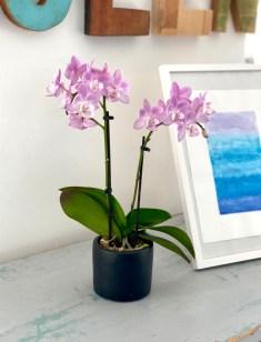 Og her er så en søt liten orkidé - ekte vel og merke som står og lyser opp på Syskolen