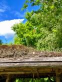 Overalt hersker idyllen - blomstrende valmuer på et gresstekt tak. Det var muligens ikke så idyllisk i jernalderen, men hardt arbeide for å overleve