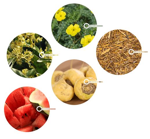 ED Elixir ingredients