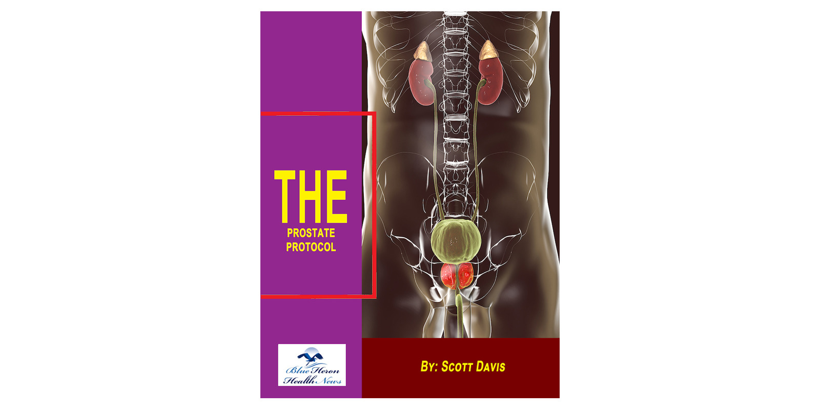 The Prostate Protocol reviews