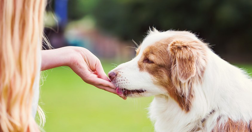 Struggling To Make Your Dogs Take Their Pills? Tricks And Easy Solutions