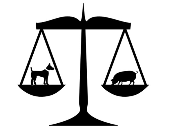 Animal Law This Week at HLS | The Justice Blog