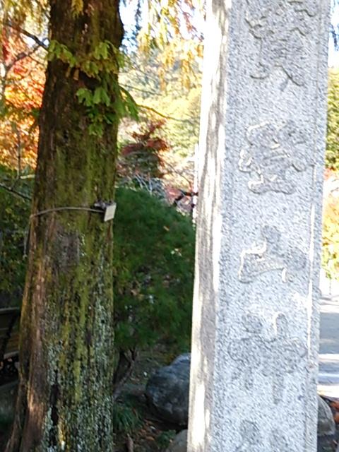 秩父の宝登山神社に行ってきた!行き方や感想