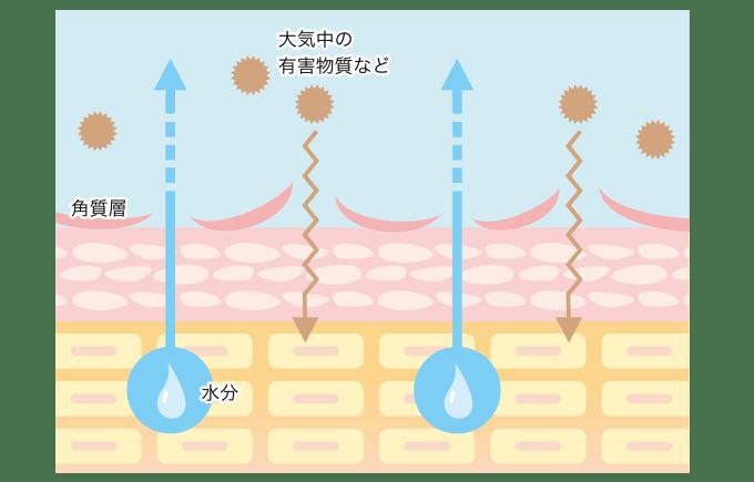 角質層 バリア機能