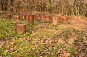 Mecsek ősz