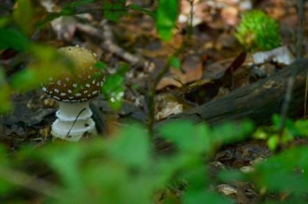 Keresd a gombát!