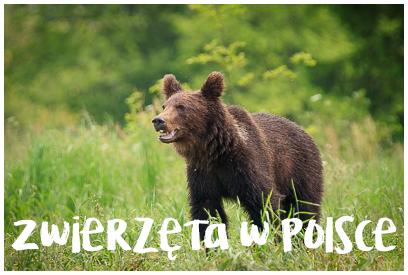 Najładniejsze zdjęcia zwierząt z Polski