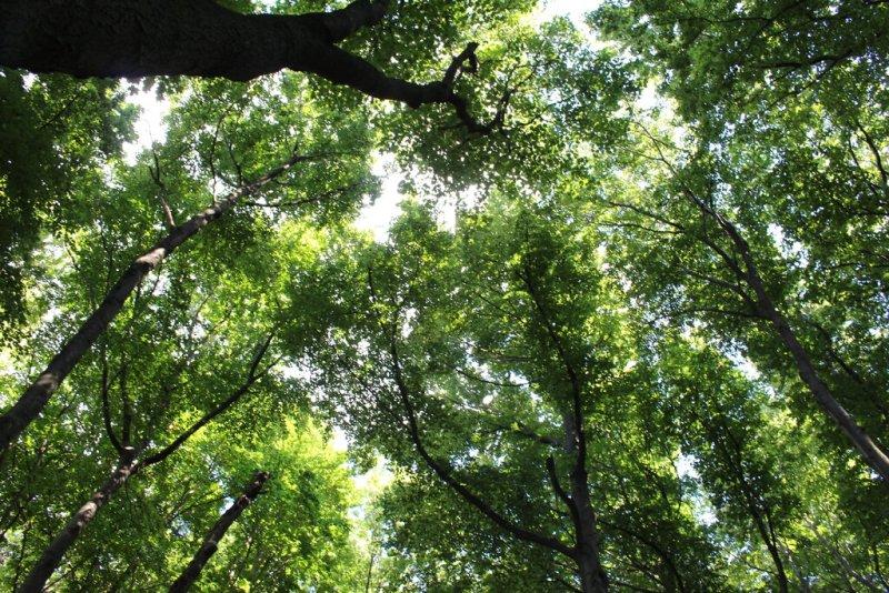 Erdők Világnapja