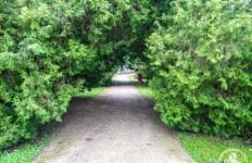 Park Królewskie Łazienki