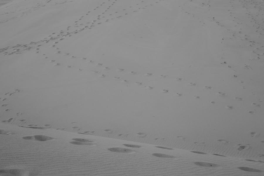 Plener ślubny wydmy łeba