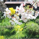 春のほっこり写真