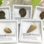 化石にも会える?!天然石アクセサリーフェア![9/15.sun]