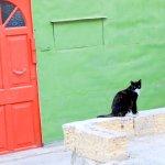 楽園…かもしれないニャン。猫好きの聖地、地中海「マルタ島」をゆく