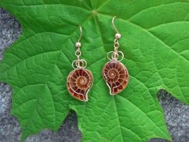 Split ammonite fossil earrings in 14K gold fill.