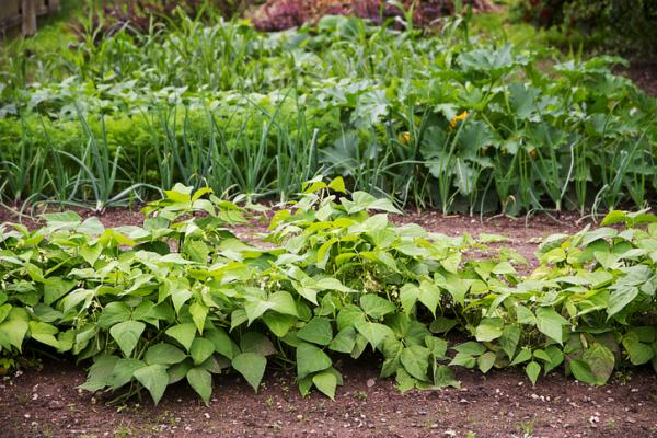 What is Crop Rotation: Types and Benefits - Benefits of Crop Rotation