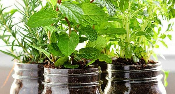 How to grow herbs at home - Soil and compost