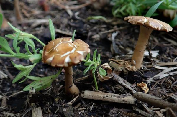 Why do mushrooms grow in my garden and how to eliminate them - Why do mushrooms grow in a garden - the causes