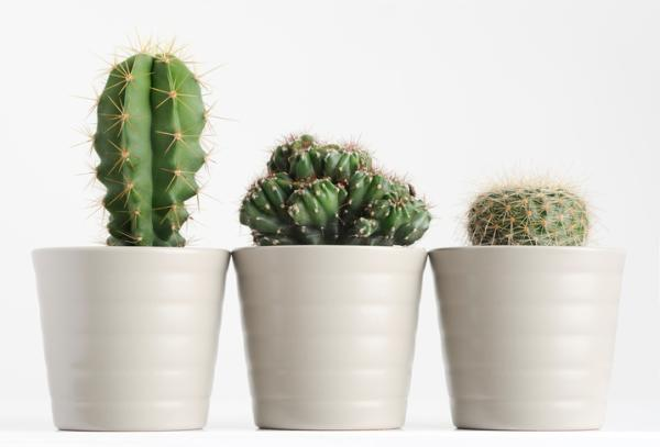 Homemade fungicides for cacti - Fungi that affect cacti