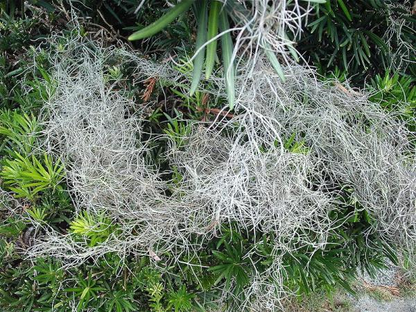 Air plants: types, names and care - Names of air plants
