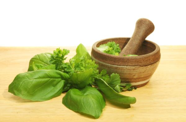 50 Mexican medicinal plants and what they are for - Properties and medicinal uses of basil (Ocimum basilicum)