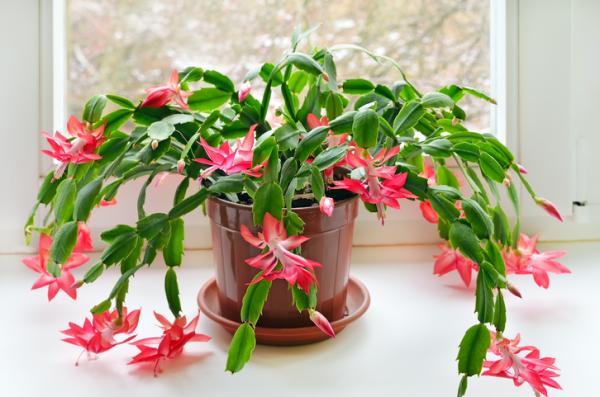 29 Indoor Hanging Plants - Hanging Succulent Plants for Indoor Decoration