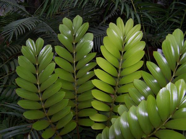 +25 indoor plants that need little light - The zamioculca plant for indoor with little light
