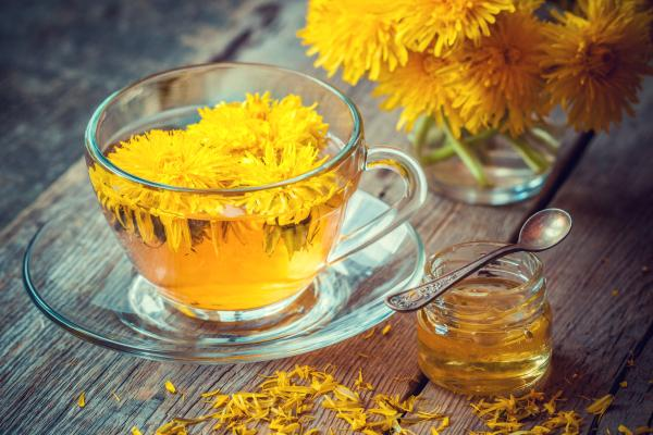 How is the dandelion plant and what is it for? - What is the dandelion for - properties and benefits