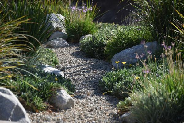 Mediterranean garden plants - Natural elements for a sustainable garden