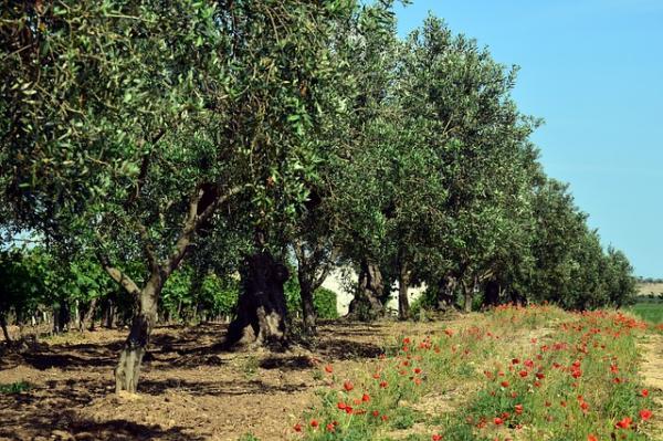 Mediterranean plants for garden - What is xero-gardening or sustainable gardening