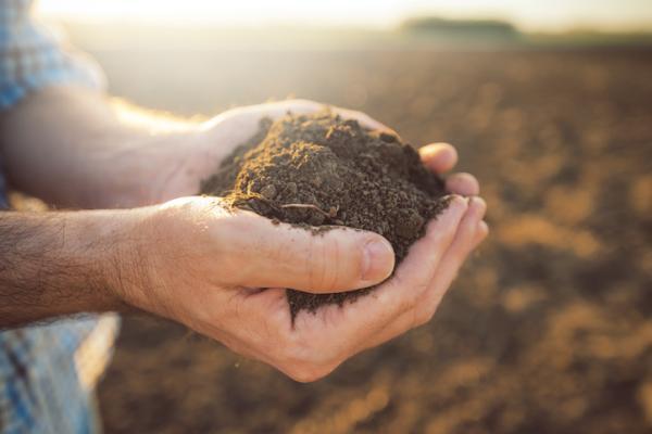 Uses of hydrogen peroxide in the garden - Hydrogen peroxide as a fertilizer for plants