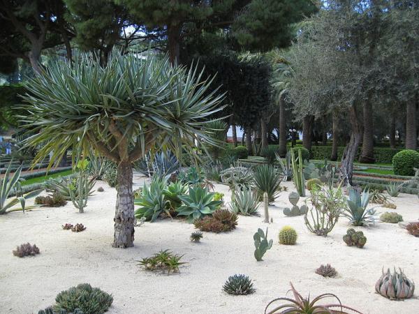 11 types of gardens - Sustainable or xerophilous garden