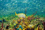 Colorful sea life underwater with shoal of fish - 67220888