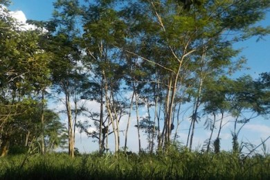 amazon_foret_758929769 دراسة: غابة الأمازون فقدت نحو 30 مليون هكتار Actualités