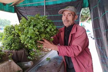 """menthe_tiznit1_471117057 نعناع تزنيت .. نبتة شهيرة ترفع جرعة اللذة في """"البراد"""" المغربي فلاحة"""