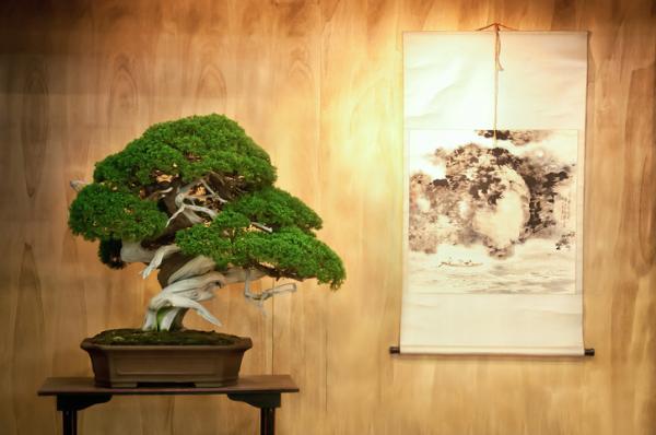 19 types of bonsai - Hokidachi