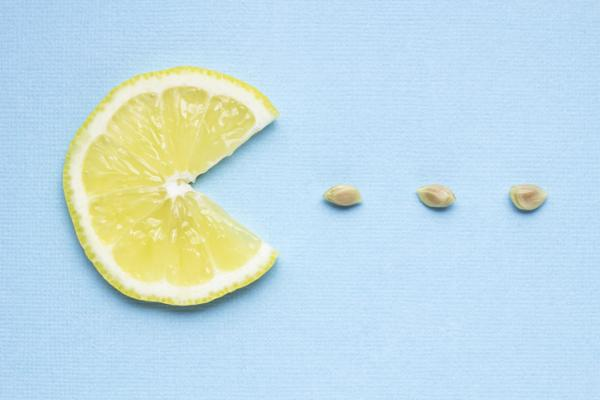 Germinate lemon seeds: how to do it and care - How to germinate lemon seeds step by step