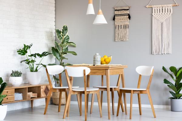 25 Tall Indoor Plants - Indoor Ficus