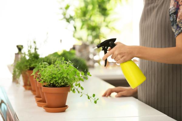 Oregano plant: care and what it is for - Oregano plant care - practical guide