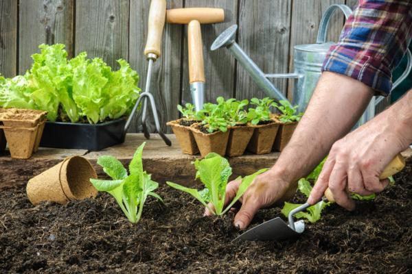 22 Fast Growing Plants - Fast Growing Plants for the Garden