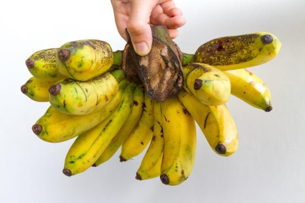 Types of bananas - Gros Michel